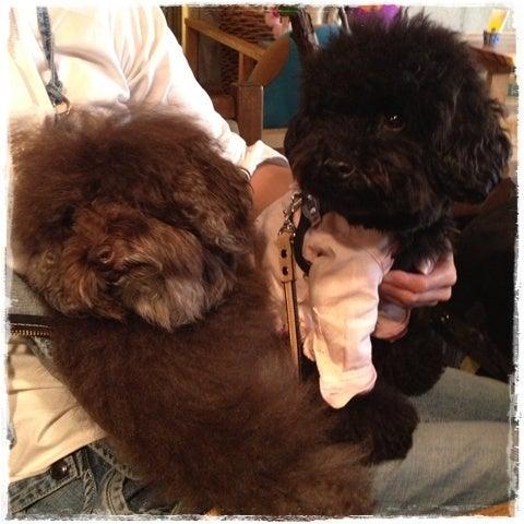 旅犬Lani&Leaのほほん風船記-10.31Halloween