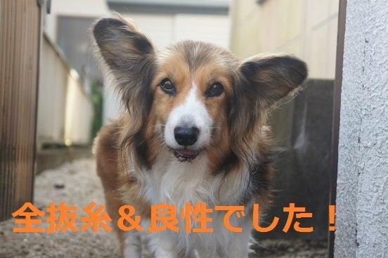 $パッしおん!のブログ