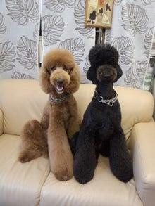 Dog Salon ぽすてぃーず