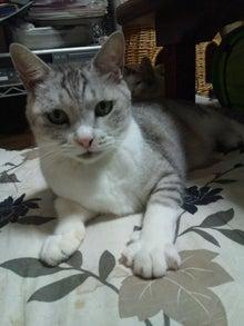 猫だらけの毎日-DSC_0208.JPG