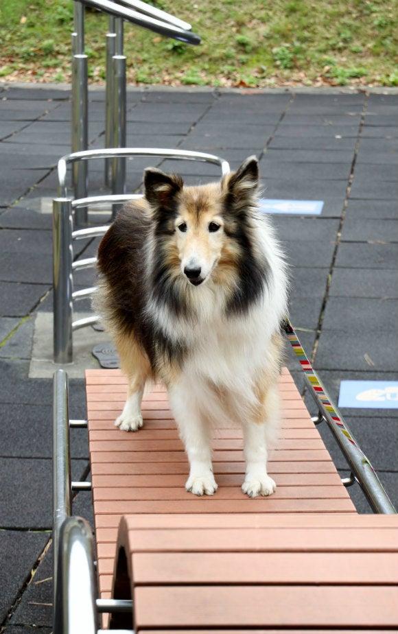 愛犬アンの成長日記