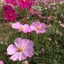 広島市植物公園ライブ…
