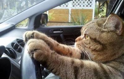 「運転 動物」の画像検索結果