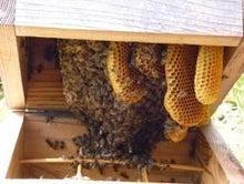 三度目で結(ユウ)-蜂の巣