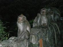 夫婦世界旅行-妻編-夜の猿たち