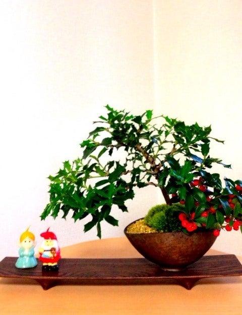 bonsai life      -盆栽のある暮らし- 東京の盆栽教室 琳葉(りんは)盆栽 RINHA BONSAI-琳葉盆栽 ヒイラギ ゴールテリア