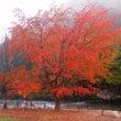 ♪秋の高山♪2013
