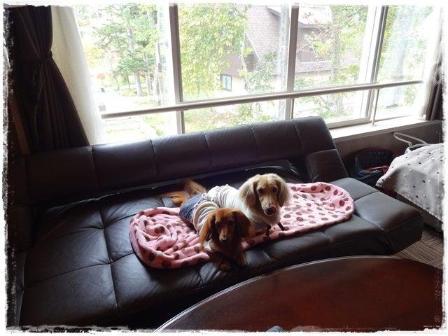 旅犬Lani&Leaのほほん風船記-VILLA11