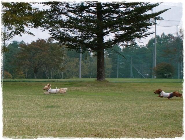 旅犬Lani&Leaのほほん風船記-北軽井沢ゴルフ場