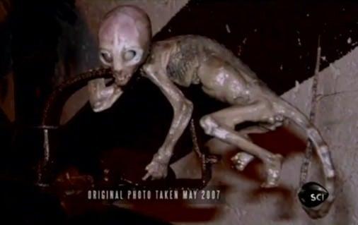 Σ(~∀~||;) 未知の生物と怪奇写真!のぞき魔幽霊 中川翔子の下半身が… 天狗のミイラ