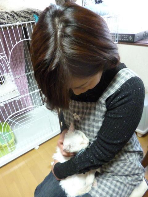 $社)アニマルエイドシェルターを卒業して新しい飼い主さん宅で暮らしている猫たちの記録をまとめています