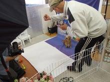 名古屋にあるドッグカフェ・スマイルドッグカフェ-写真ジロー