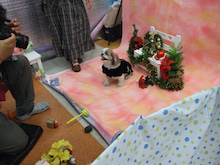 名古屋にあるドッグカフェ・スマイルドッグカフェ-写真もも
