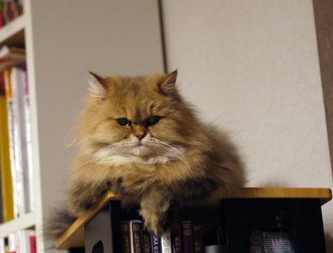 猫のようにまったりと♪