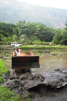 $マヌカイのスタッフ・ブログ♪ 癒しのハワイ島旅-ワイピオ タロ ブログ