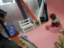 名古屋にあるドッグカフェ・スマイルドッグカフェ-写真ティファニー