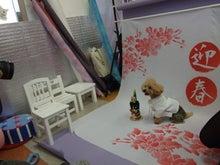 名古屋にあるドッグカフェ・スマイルドッグカフェ-写真sora