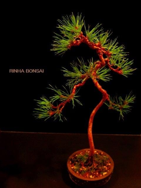 bonsai life      -盆栽のある暮らし- 東京の盆栽教室 琳葉(りんは)盆栽 RINHA BONSAI-琳葉盆栽 赤松