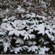 雪が降りました。『初…