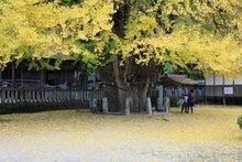 広島西区アプライドキネシオロジーを施療に取り入れた大谷整骨院のブログ