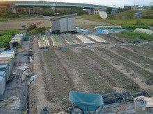 耕作放棄地を剣先スコップで畑に開拓!有機肥料を使い農薬無しで野菜を栽培する週2日の農作業記録 byウッチー-131112ウッチー式・今日の農作業の出来栄え04
