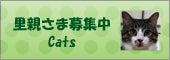 $CAPIN(キャピン) 活動報告