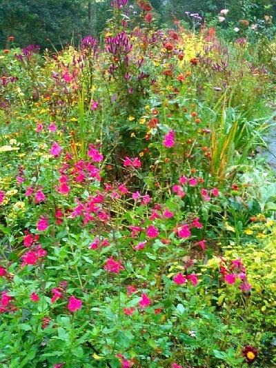 mellow garden