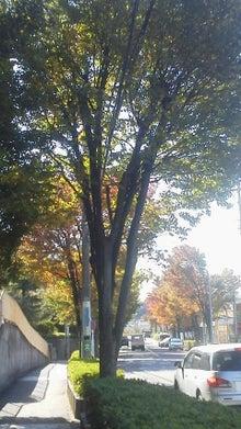 腐ってやがる・・・ぷログ-秋の木々