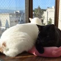 今シーズン初♪猫団子…