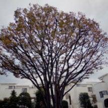 ■「葉っぱのフレディ…