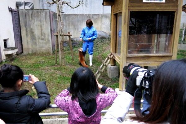 とべ動物園を応援する写真クラブのブログ-レッサーパンダで撮影会