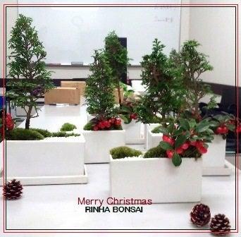 bonsai life      -盆栽のある暮らし- 東京の盆栽教室 琳葉(りんは)盆栽 RINHA BONSAI-琳葉盆栽 ヒノキ ゴールテリア