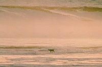 イルカと泳ぐツアー!御蔵・ハワイでネイチャーヒーリング、イルカ画像もいっぱい【byイルカアルバム】