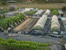 耕作放棄地を剣先スコップで畑に開拓!有機肥料を使い農薬無しで野菜を栽培する週2日の農作業記録 byウッチー-131119ウッチー式・今日の農作業の出来栄え03