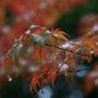 紅葉の季節ですねー