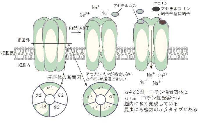 化学物質過敏症 runのブログその3:ネオニコチノイド系農薬のヒト・哺乳類への影響コメント