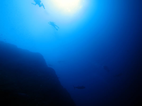 Audrey Diving Service ~海日誌~-イソマグロ