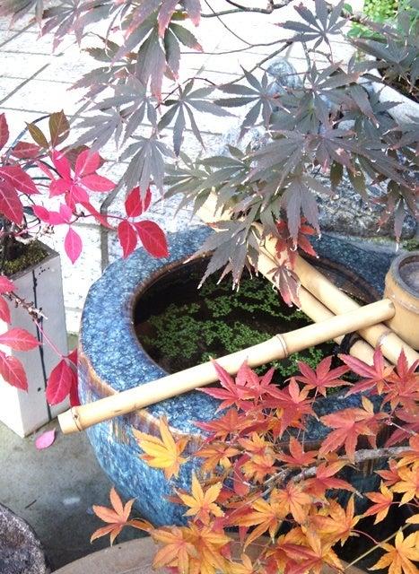 bonsai life      -盆栽のある暮らし- 東京の盆栽教室 琳葉(りんは)盆栽 RINHA BONSAI-琳葉盆栽 もみじ 紅葉