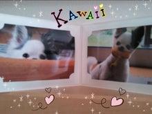 Happy Paws預かり日記-1385269150132.jpg