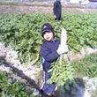 農業体験@収穫!