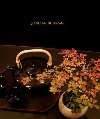 bonsai life      -盆栽のある暮らし- 東京の盆栽教室 琳葉(りんは)盆栽 RINHA BONSAI-琳葉盆栽 ヒメサルスベリ