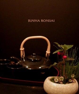 bonsai life      -盆栽のある暮らし- 東京の盆栽教室 琳葉(りんは)盆栽 RINHA BONSAI-琳葉盆栽 ヒメヤブコウジ