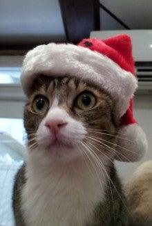 $佐賀の猫カフェコロンの癒しブログ