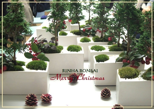 bonsai life      -盆栽のある暮らし- 東京の盆栽教室 琳葉(りんは)盆栽 RINHA BONSAI-琳葉盆栽 クリスマス
