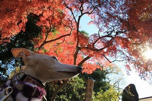 イタグレ セナ☆シルバの日記