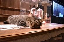 猫カフェきゃらふふっくら布ぞうり