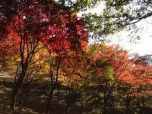名古屋婚活アドバイザー竹内志保美のブログ-紅葉