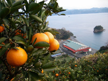 山梨県北杜市のスーパーマーケット ひまわり市場  -  自然豊かな観光地の清里・小淵沢にも近い山梨・八ヶ岳高原南麓にあります。