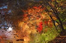 川面の紅葉3