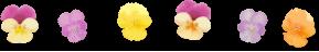 パン・ケーキ・アレルギー・デコ巻き寿司 H*M*S BEE 東京町田・神奈川相模原  資格が取れる教室